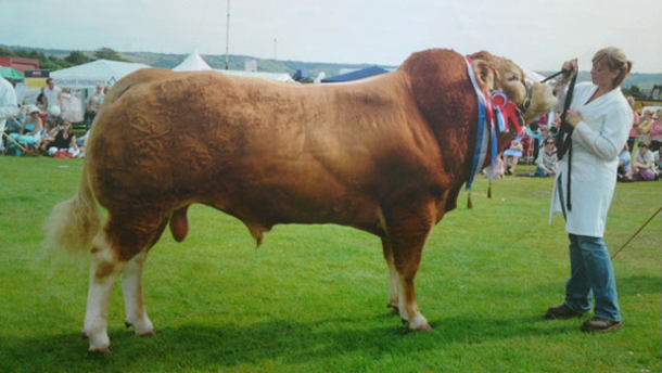 Boxster, Yorkshire's prize bull is officially TB free.